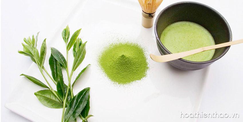 3 Cách se khít lỗ chân lông từ trà xanh kiểm soát nhờn
