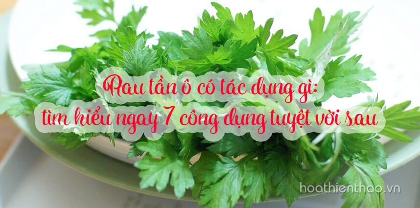 7 công dụng của rau tần ô trong làm đẹp - Hoa Thien Thao Cosmetics