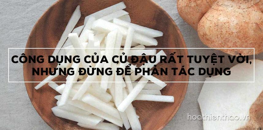 Công dụng của củ đậu rất tuyệt vời, nhưng đừng để phản tác dụng - Hoa Thien Thao