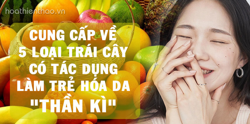 5 loại trái cây có tác dụng làm trẻ hóa da thần kì - Hoa Thiên Thảo