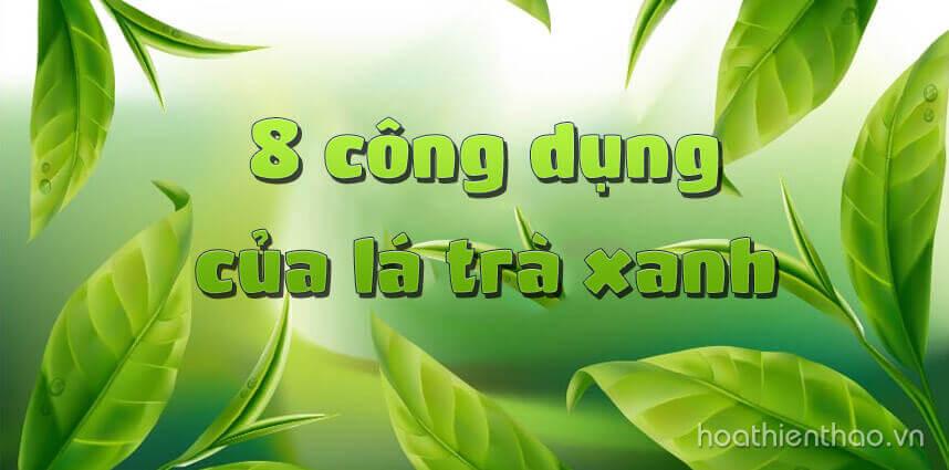 8 công dụng của lá trà xanh - Hoa Thien Thao