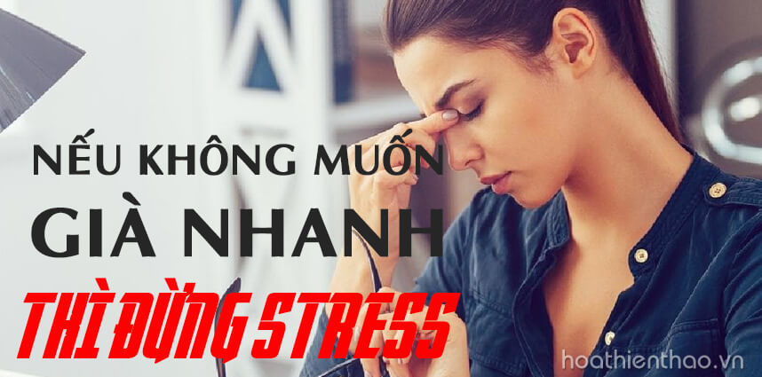 Nếu không muốn già nhanh thì đừng stress - Hoa Thien Thao Cosmetics