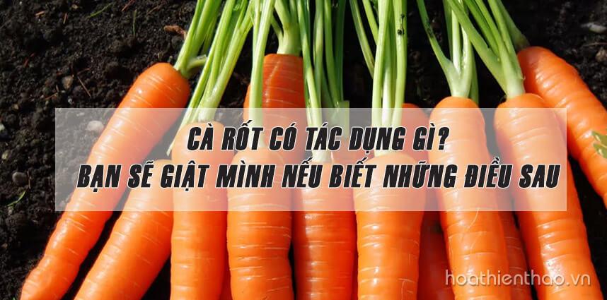 Cà rốt có tác dụng gì - Hoa Thiên Thảo Cosmetics