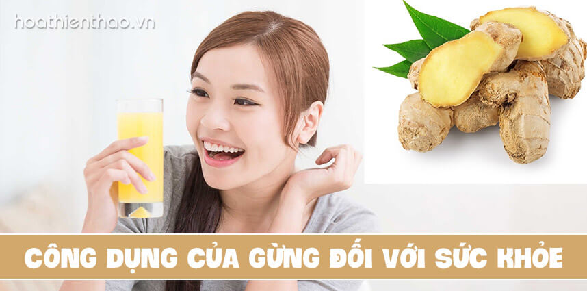 Công dụng của gừng đối với sức khỏe - Hoa Thien Thao Cosmetics