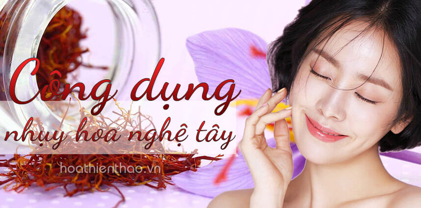 Công dụng của nhụy hoa nghệ tây saffron đối với sức khỏe và làm đẹp - hoathienthaovn
