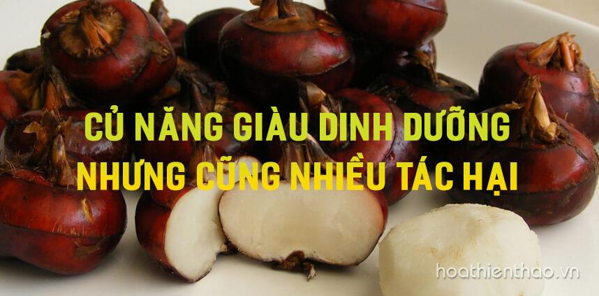 Củ năng giàu dinh dưỡng nhưng cũng nhiều tác hại - Hoa Thien Thao Cosmetics