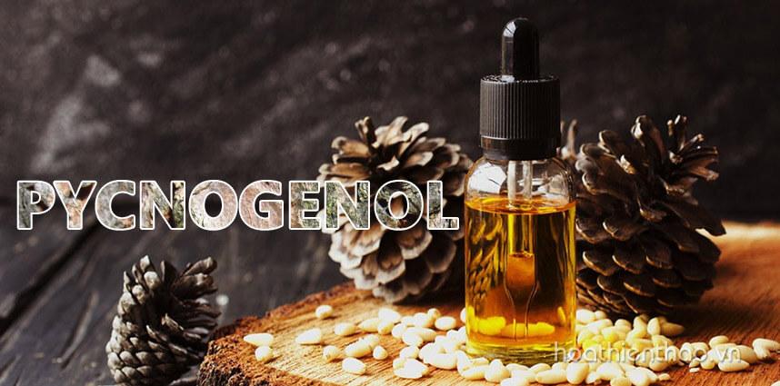 Pycnogenol là gì? Tác dụng của pycnogenol với làn da - Hoa Thien Thao